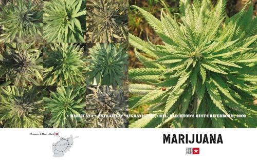 afghanistan_moyen_marijuana
